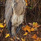 Fall Heron by Daniel  Parent