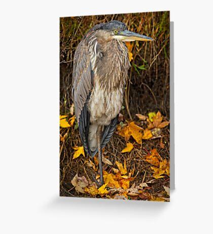 Fall Heron Greeting Card