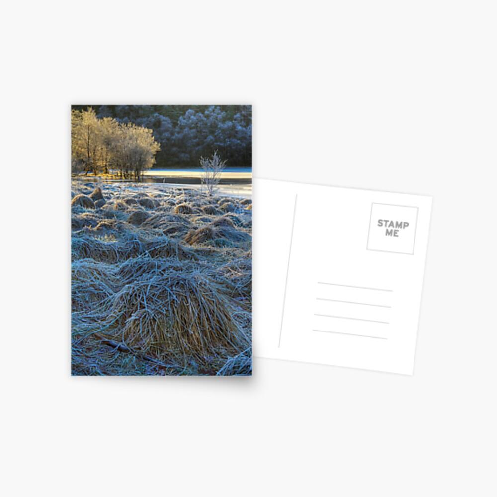 Chon Frost (1) Postcard