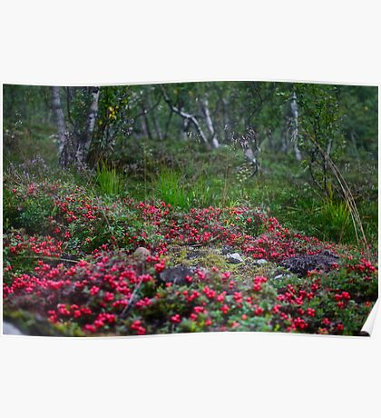 Dreamy Photo . ★★★★★ . Nature wonders - Lofoten Islands. Norway . 2011. by Brown Sugar . Poster