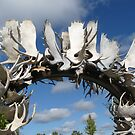 Antler Art by Braedene