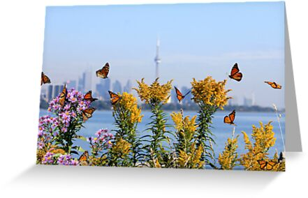 Migration Dance Of The Monarch! by NewfieKeith