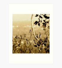 Topiary Gorge  Art Print