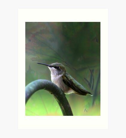 Hummingbird Dreams Art Print