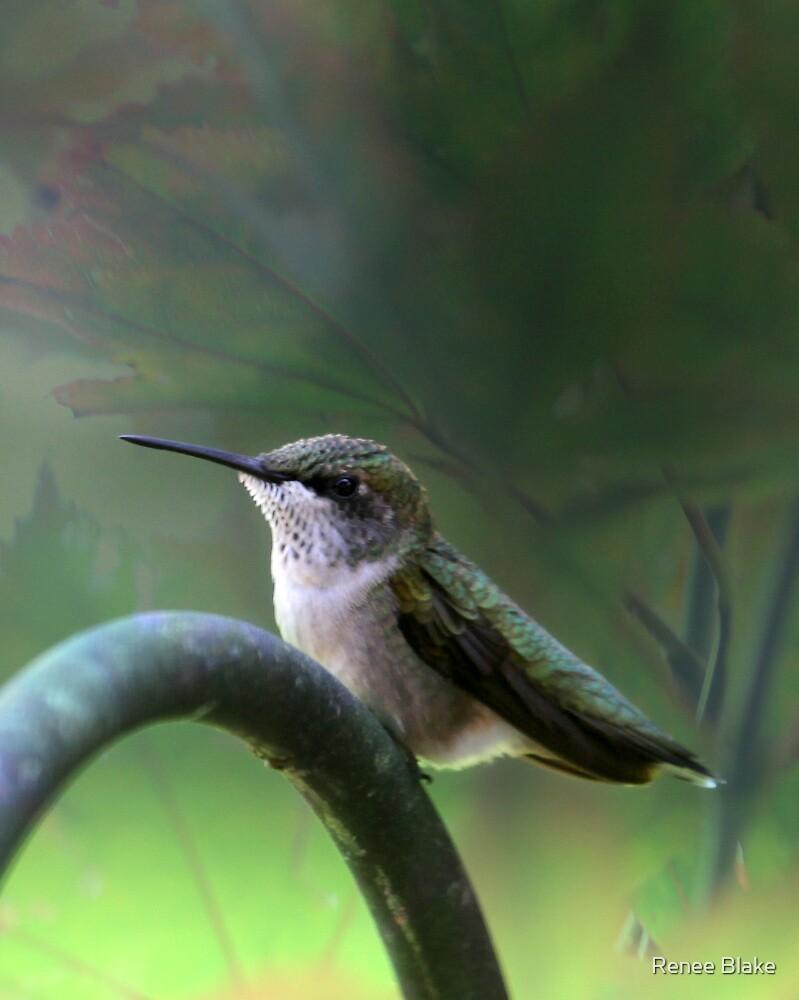 Hummingbird Dreams by Renee Blake