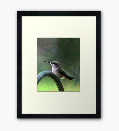 Hummingbird Dreams Framed Print