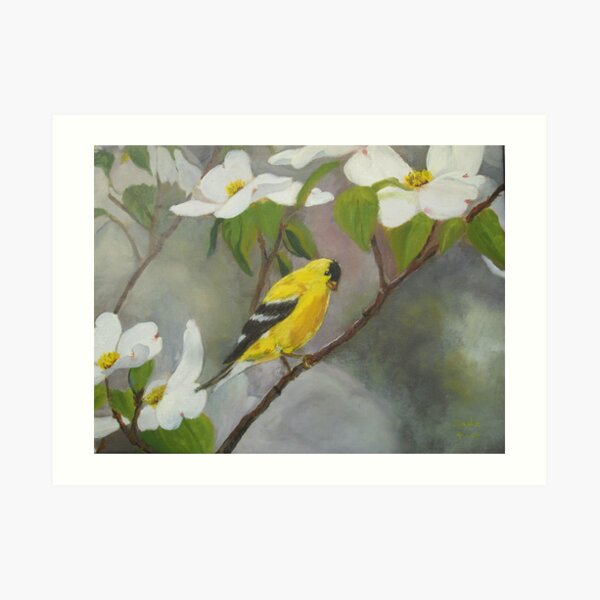 Yellow Finch on White Dogwood.  Welcome Spring Art Print
