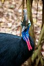 Southern Cassowary by Renee Hubbard Fine Art Photography