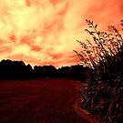 Matawai Nature Park, Rangiora by Elaine Stevenson