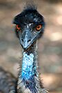 Emu by Renee Hubbard Fine Art Photography