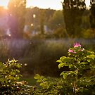 Evening light by SylBe