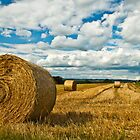 Hay Fields of Heyshott by Alex  Motley