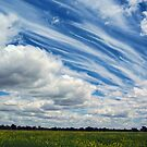 CANOLA AND WHISPY CLOUDS by Helen Akerstrom Photography