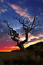 Lone Tree by David Alexander Elder