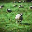 A rural scene in Dorset, UK by David Carton