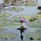 Water Music by Hank Eder