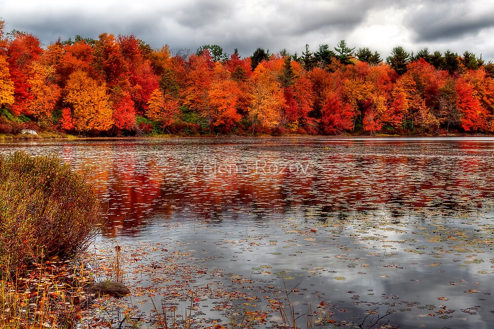 Autumn colors by Yelena Rozov