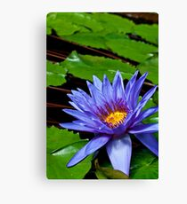 Nymphaea Director George T Moore  Canvas Print