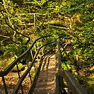 Log Bridge, Becky Falls by moor2sea