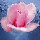 Magnolia Pink by Dale Lockridge