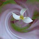 Trillium Ovatum by Dale Lockridge
