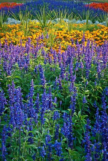 Floral bed in Grosvenor Park Chester uk. by PhillipJones