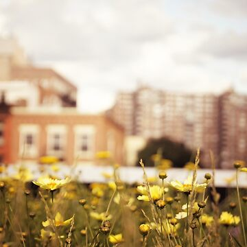 Flowers Along the High Line - New York City de vgucwaphoto