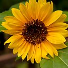 Hello Sunshine by Diana Nault