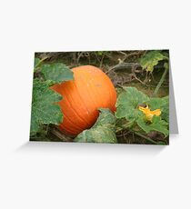 Harvest Time 2 Greeting Card