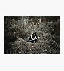 Throne Of Thorns Photographic Print
