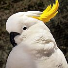 """Sulphur Crested Cockatoo""  by Toni Kane"