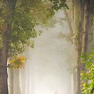 Beneath a Canopy by Mary Ann Reilly