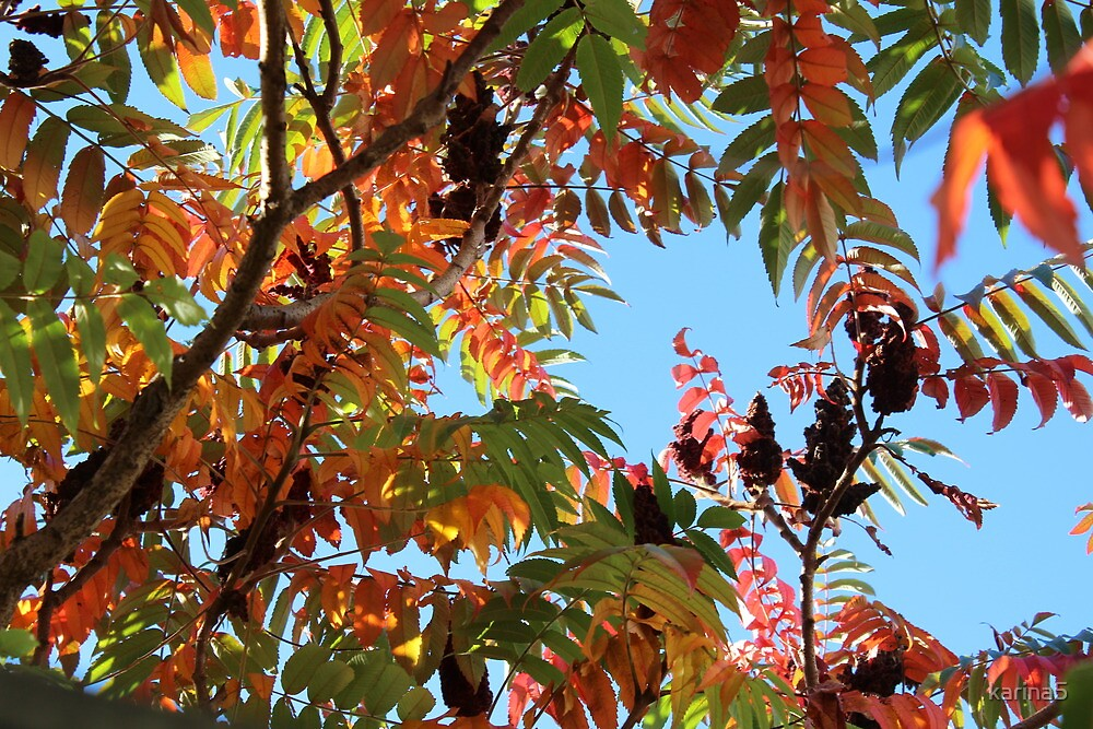 Stag's Horn Sumac by karina5