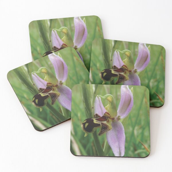 Bee orchid Coasters (Set of 4)