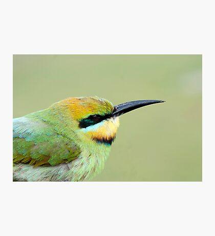 Rainbow Bird Photographic Print