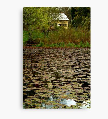 Lilies, Jubilee Lake, Daylesford Canvas Print