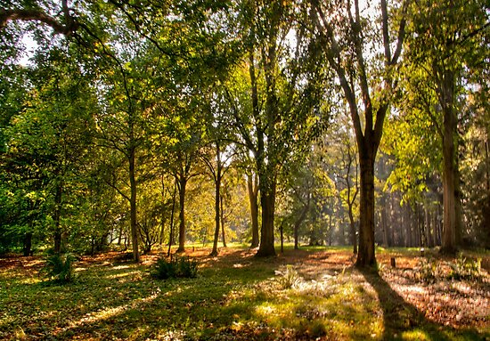 Autumn in the Woods by Trevor Kersley