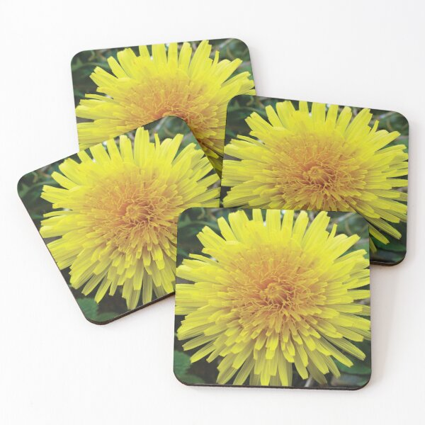 Dandelion flower Coasters (Set of 4)