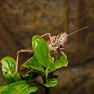 Anyone for Cricket ?? by AnnDixon