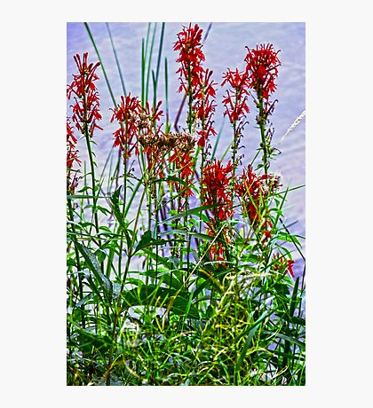 Flowers along the Lake Photographic Print