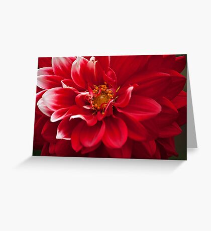 Touch of White Greeting Card