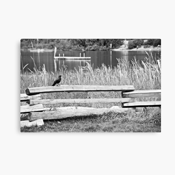 Crow on Fence Canvas Print