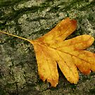 Shapes of Autumn by GlennB