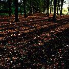 Autumn Forest Light by GlennB