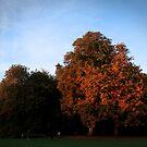 Autumn Gold by GlennB