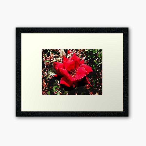 """""""Fiore Rosso Sangue"""" Framed Art Print"""
