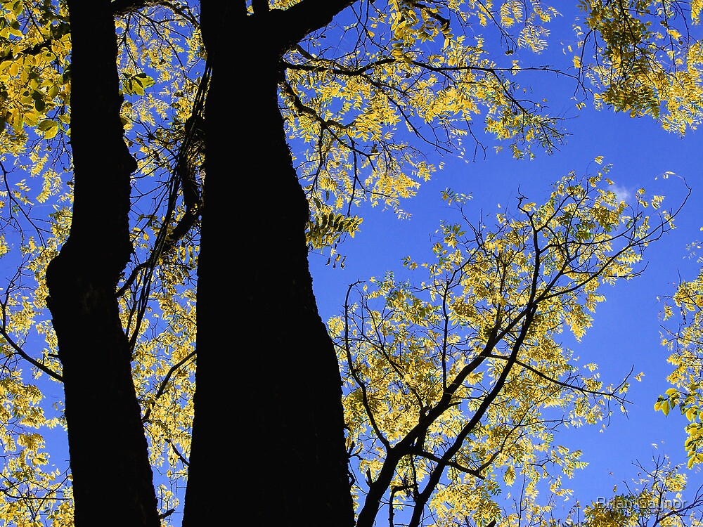 Piercing the Sky by Brian Gaynor