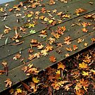 Fallen Leaves by GlennB
