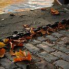 Leaf and Chain by GlennB