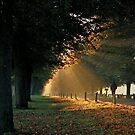 Morning Walk by GlennB